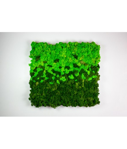 Tablou mix licheni 40x40 cm