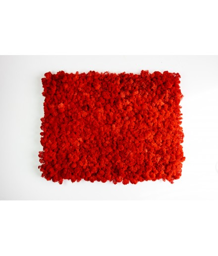 Tablou licheni 55x40 cm