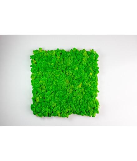 Tablou licheni 40x40 cm