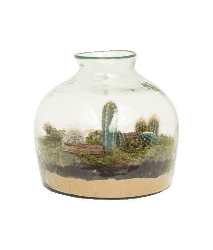 Terariu cactus