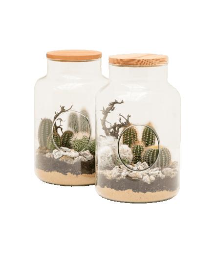 Terariu cactus sticla