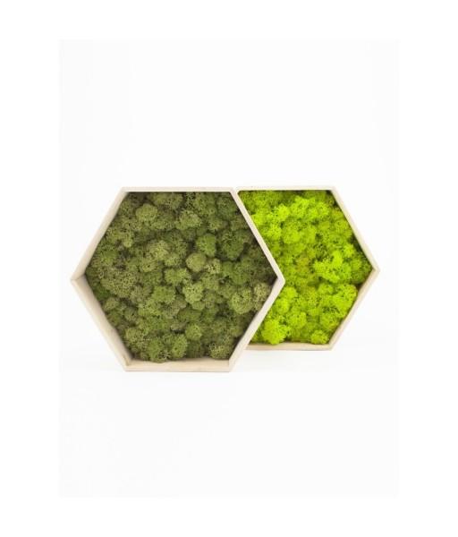 Mix hexagoane licheni decorativi
