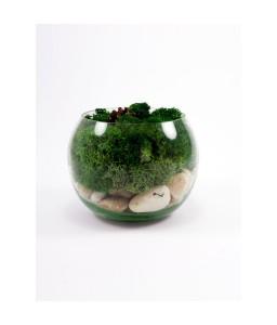 Terariu bol licheni decorativi